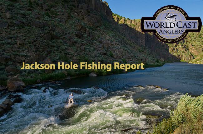 Jackson Hole Fly Fishing Blog