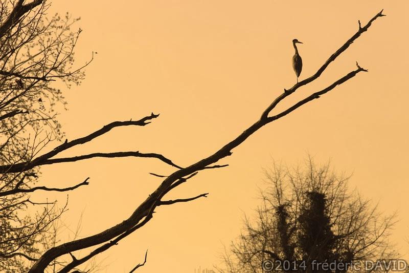 silhouette héron oiseau arbre branche marais Misery Essonne