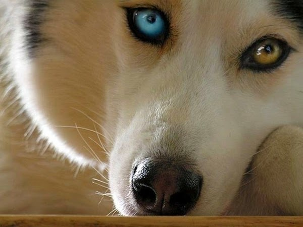 Dogs That Have Hazel Eyes