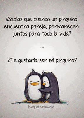 amor pinguinos