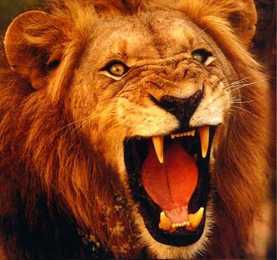 http://3.bp.blogspot.com/-OvKHkg6WLvs/TaQtAL1Cl_I/AAAAAAAAAHU/fLryj0BdlJA/s1600/lion1.jpg