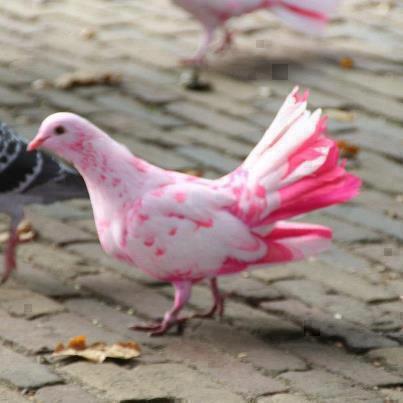 اروع مايمكن ان تشاهده من صور الطيور  طيور10