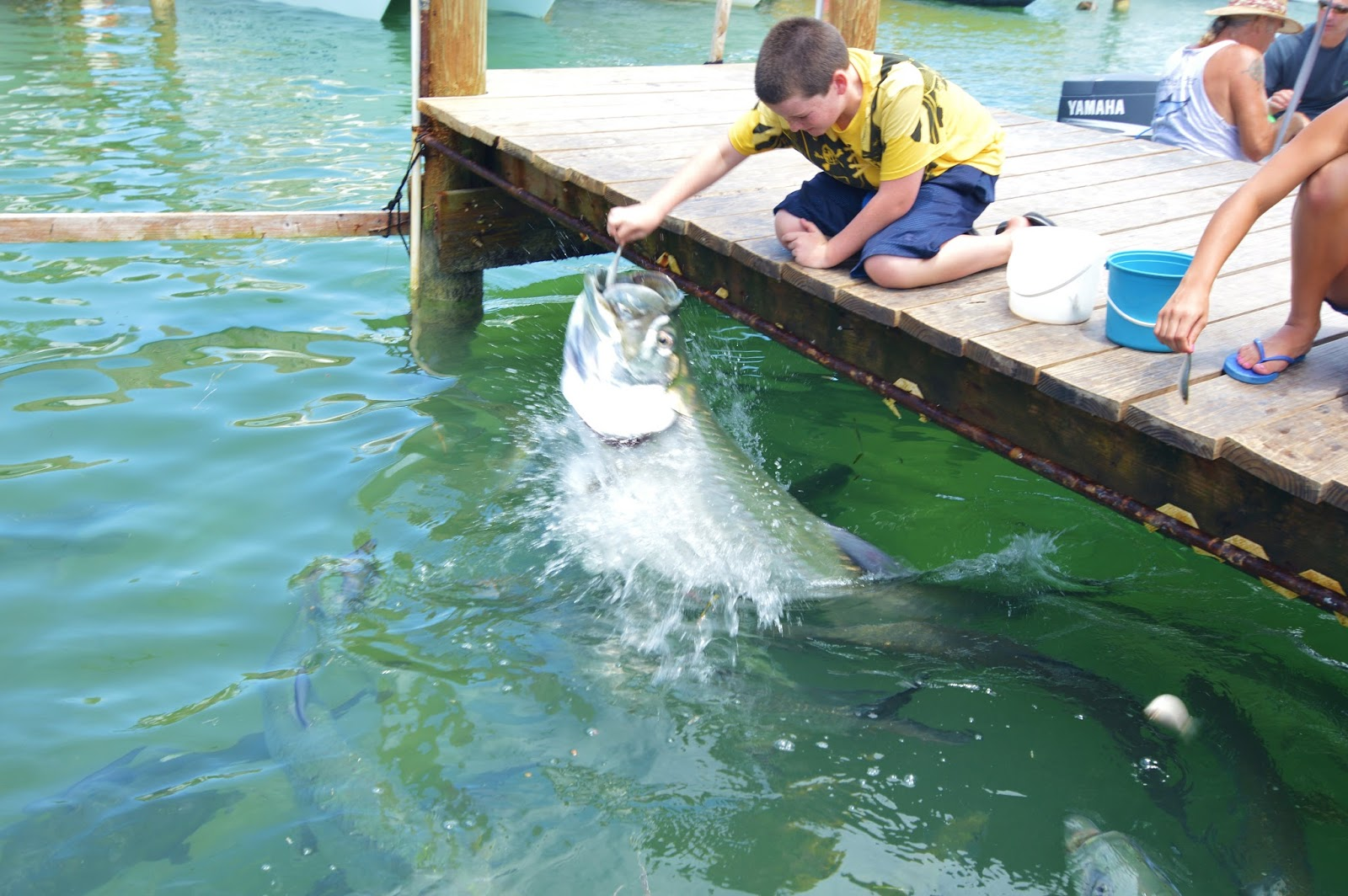 The pine island angler feeding the tarpon at robbie 39 s for Islamorada florida fishing