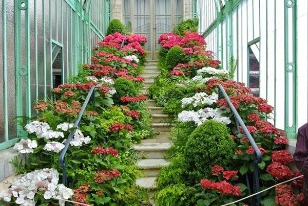 "<img src=""royal-greenhouses3.jpg"" alt=""royal green house"">"