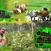Watch Asianet Kissan Krishideepam on 31st August 2014