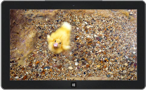 Decorated Eggs and Ducklings Themes for Windows 8 and 7