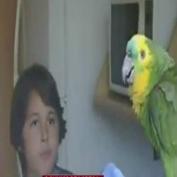 Papagaio de 33 anos foi sequestrado por motociclista