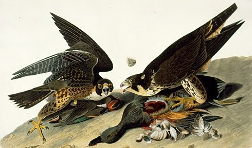 John James Audubon - Revista de True West