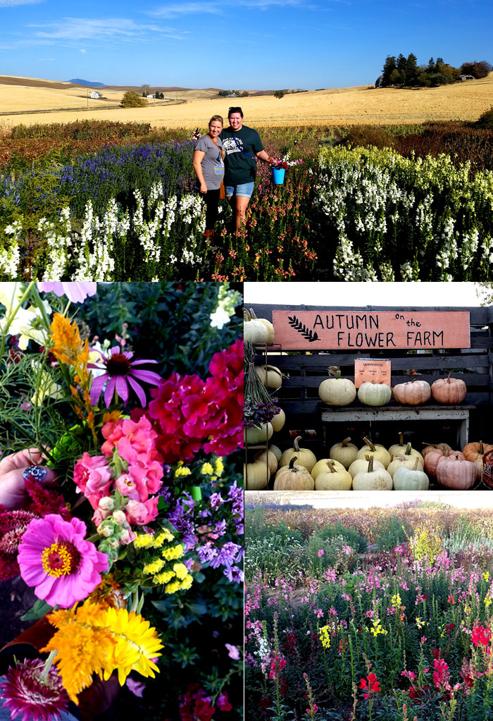 Sunshine Crafts and Flowers U-Pick Flower Farm