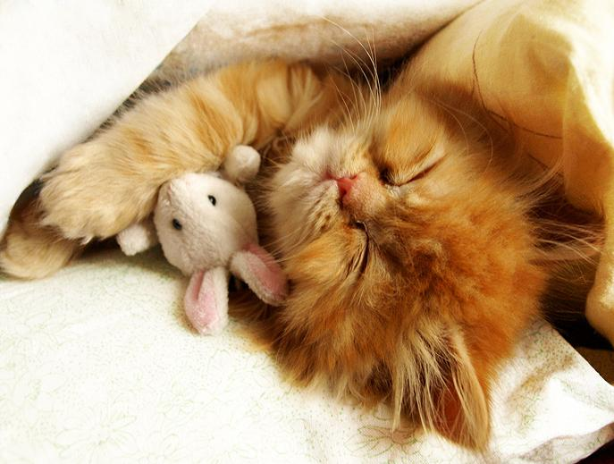 Cute and funny sleeping cats (Funny pictures) ~ Love-sepphoras