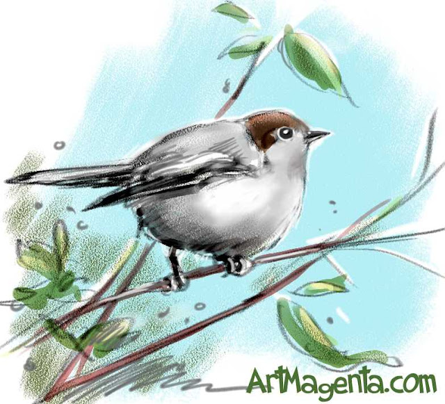 Blackcap sketch painting. Bird art drawing by illustrator Artmagenta