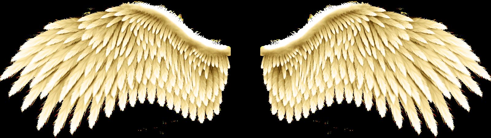 asas de anjo ficam - photo #10