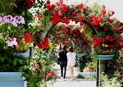 เทศกาลดอกกุหลาบ Seoul Grand Park Rose Festival