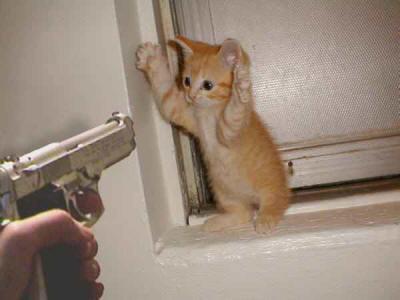 chiste gato y gallego para rubias