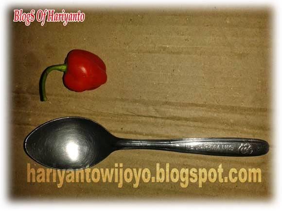 Lada Katokkon Cabai Super Hot Khas Toraja