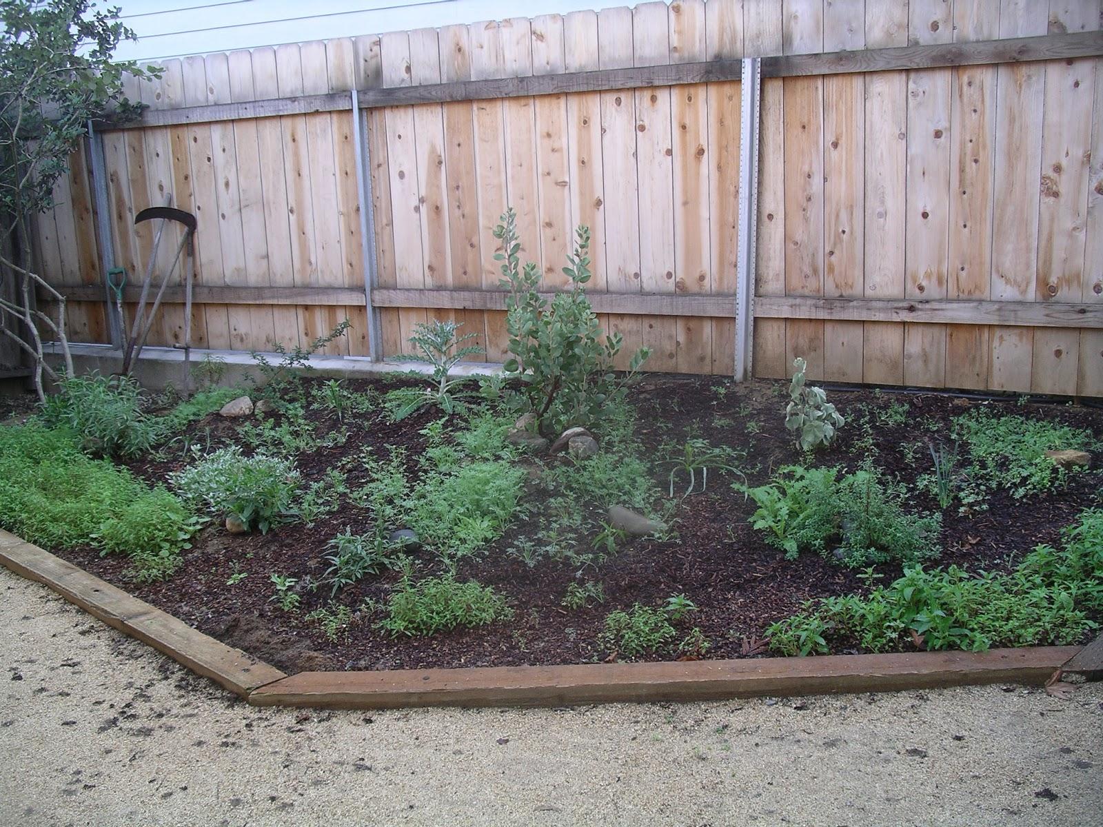 a california native plant garden in san diego county a garden u0027s