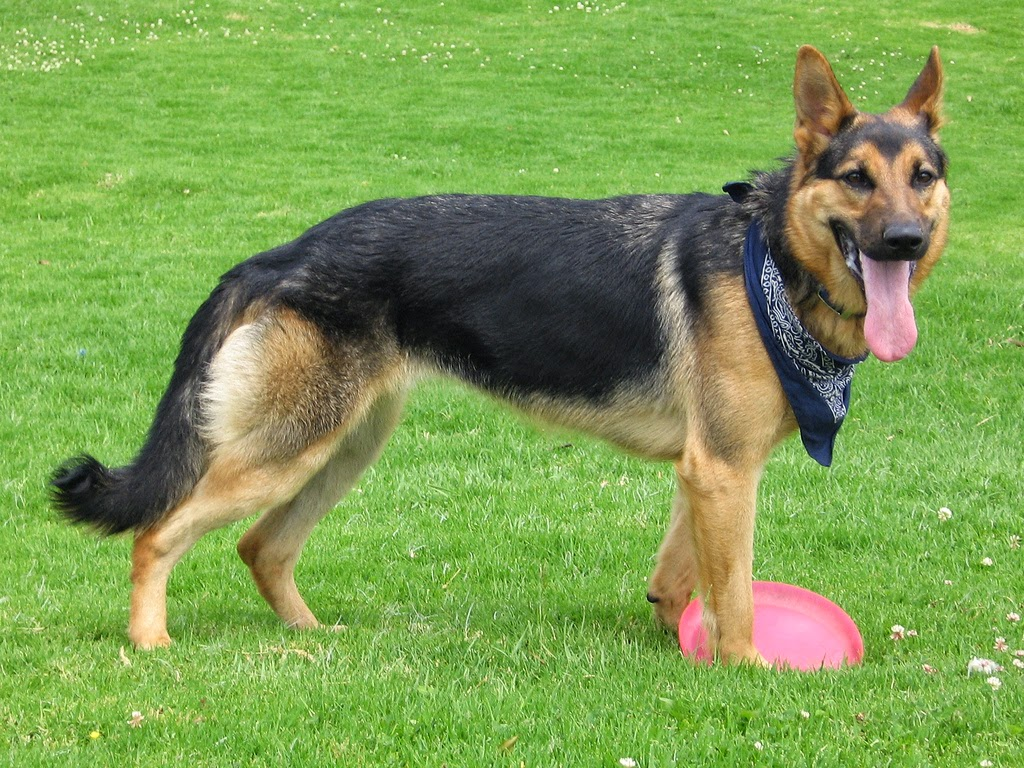 loyal dogs Known as man's best friend, dogs are known for their unwavering loyalty to their owners but one faithful dog has set a new standard even for canines, having waited.