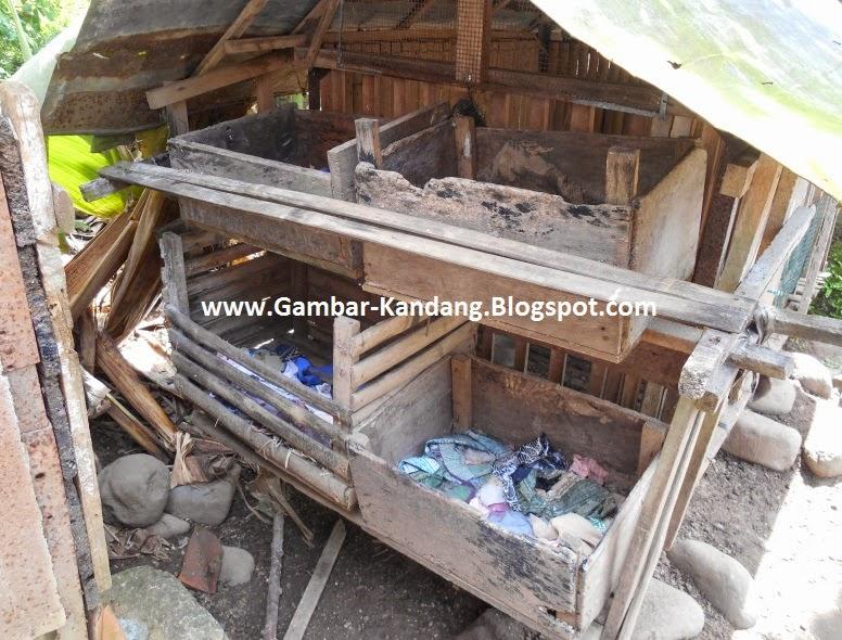 tempat bertelur ayam kampung dari bahan kayu bekas