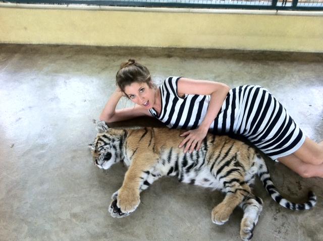 diva in distress hello tiger. Black Bedroom Furniture Sets. Home Design Ideas