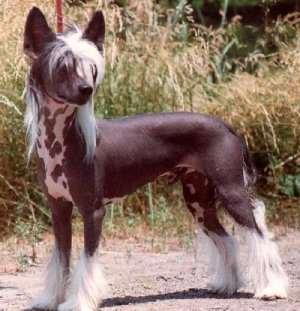 cães esquisitos