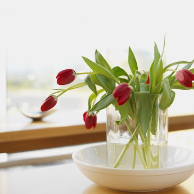 Hogar diez decorar con plantas - Hogarutil plantas ...