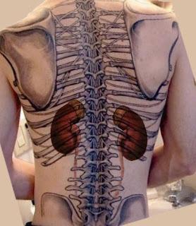 Localização dos rins