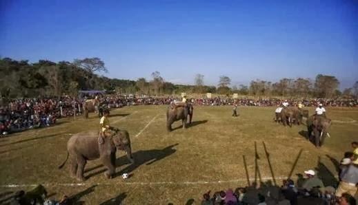 مباراة كرة قدم للفيلة في نيبال - elephant football nepal