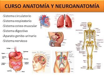 CURSO DE ANATOMÍA Y NEUROANATOMÍA