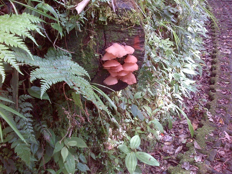 Fungi in Cloud Forest