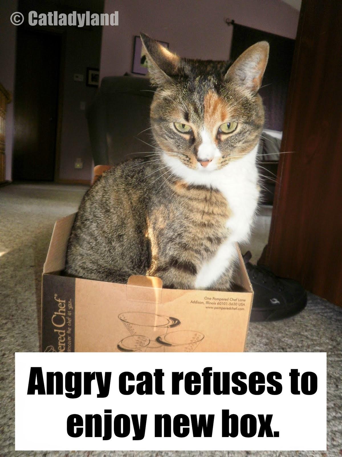 Cat Faces Meme