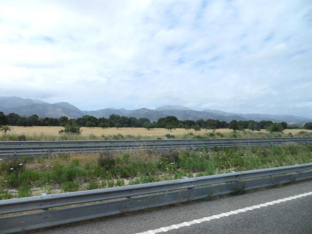trees Mallorca