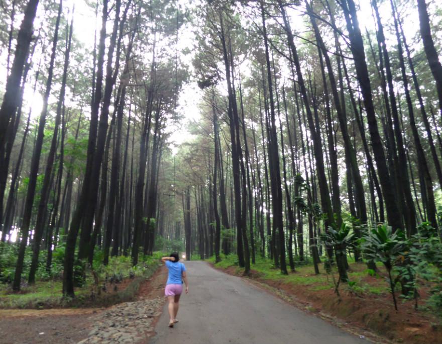 Sewa Mobil Jogja Wisata Ke Mangunan - Hutan Pinus - Pantai ...