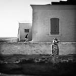 Feel the Wind - Laurent Miaille