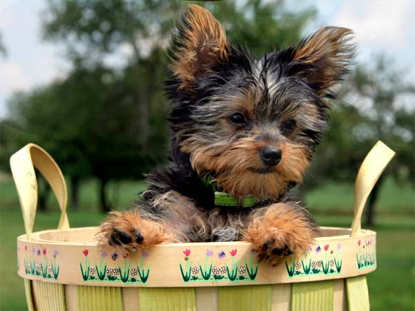 Image Result For Best Small Breed