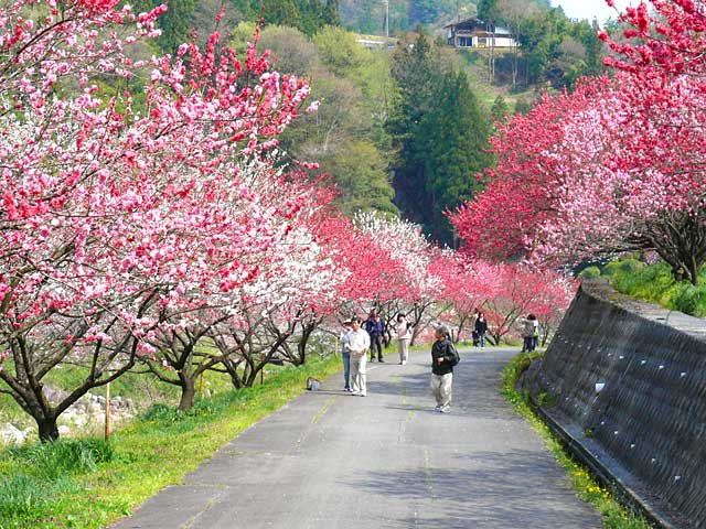 Karibu Prosper One Of The Beautiful Place In Japan
