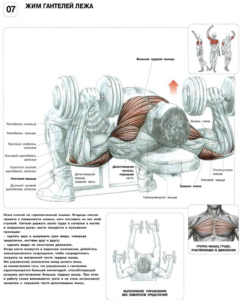 Мышцы груди упражнения 16 фотография