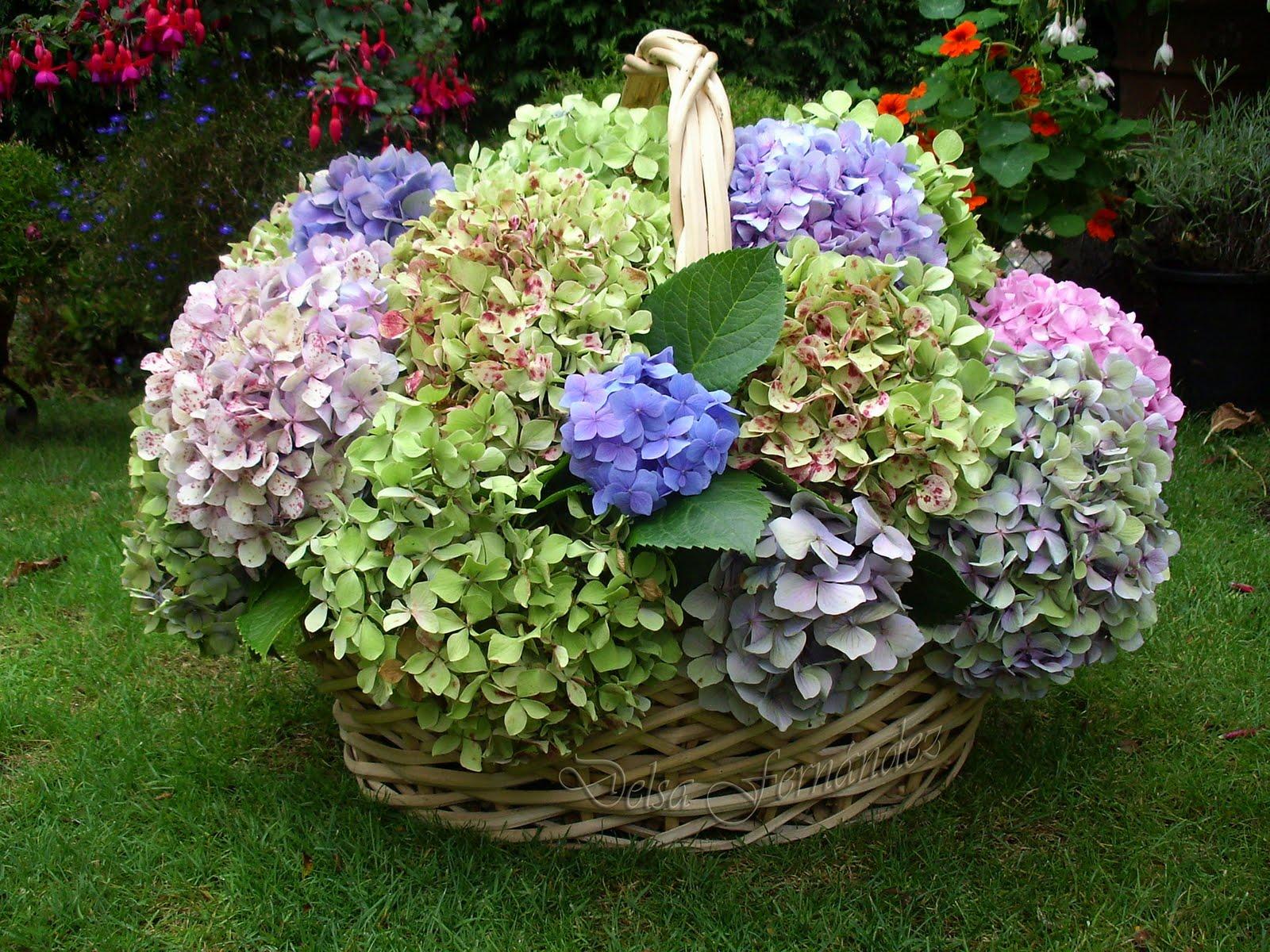 El blog de delsa hortensias - Poda de hortensias epoca ...