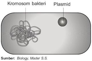 Sel bakteri