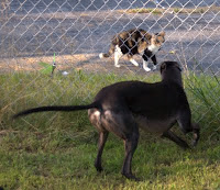 Bettina greyhound tries to reach kitty