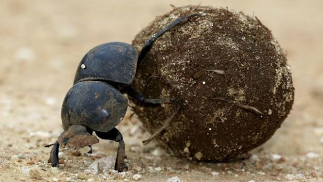 A semente que se disfarça de fezes para garantir sobrevivência da espécie