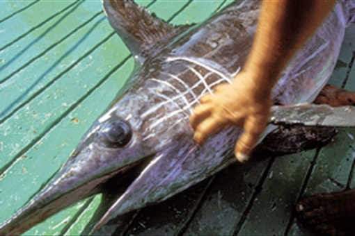 Swordfish fisheries in Italy