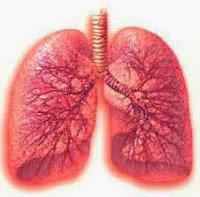 Obat paru paru bengkak