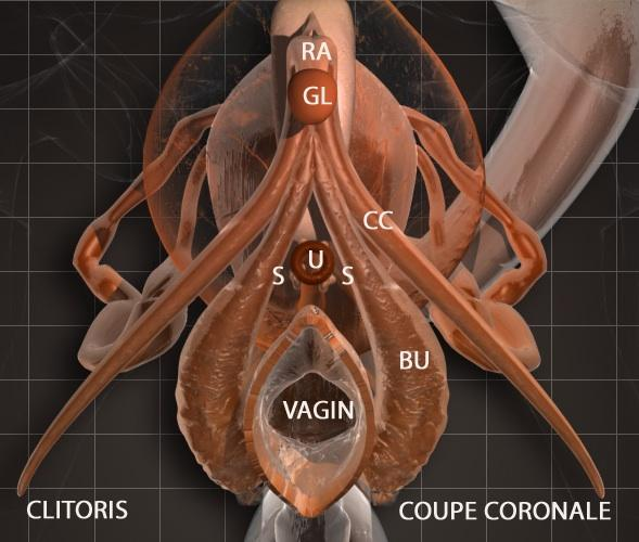 LE CLITORIS EN PHOTO OU PRESQUE - Cosmopolitanfr