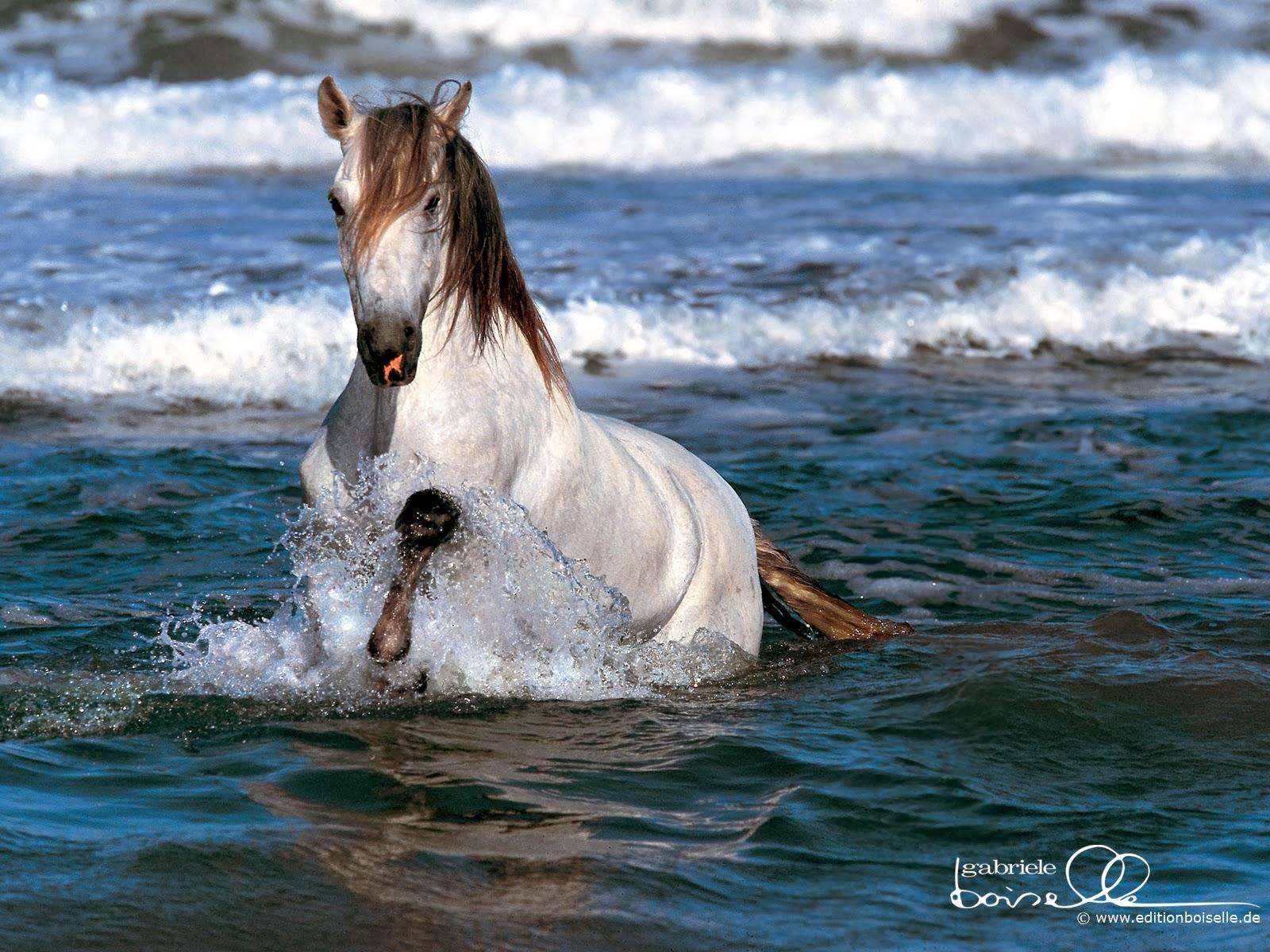 Popular   Wallpaper Horse Epic - Horse+HD+Funny+Wallpapers+07  Image_604334.jpg