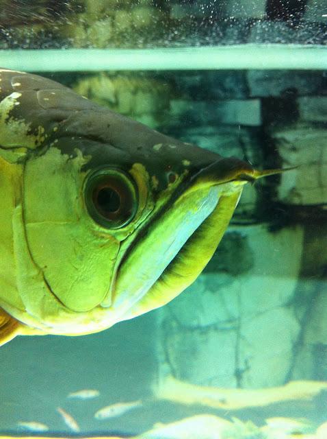 Vietnam fish tank
