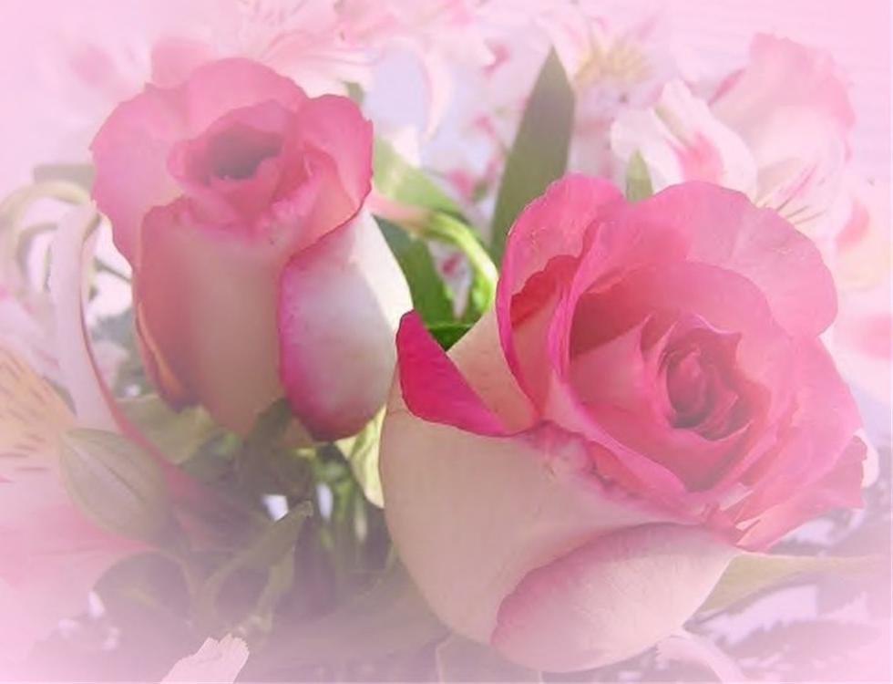 Alcira fer alcira nany mis imajenes bonitas - Fotos flores bellas ...