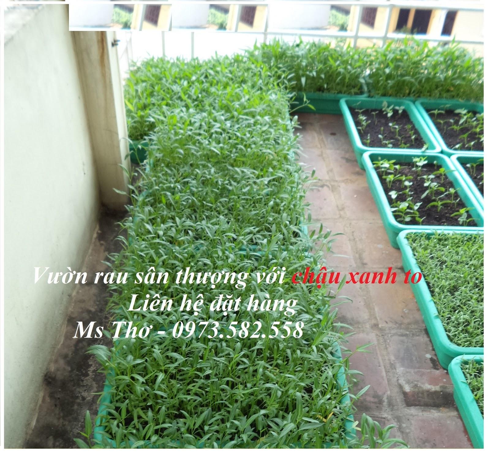Chậu trồng rau sạch giá 60.000đ