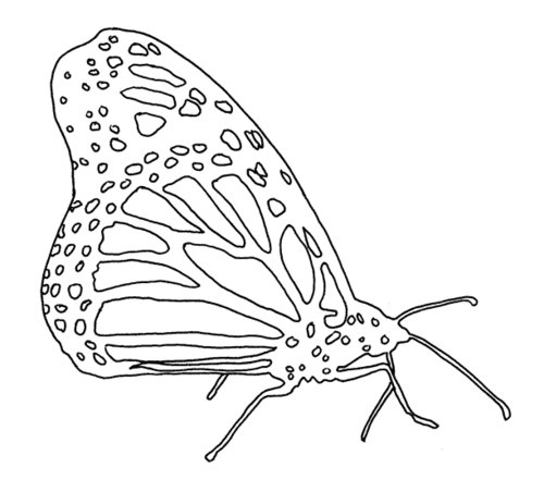 Life Cycle of a Monarch Butterfly Coloring page Free  - monarch butterfly coloring page