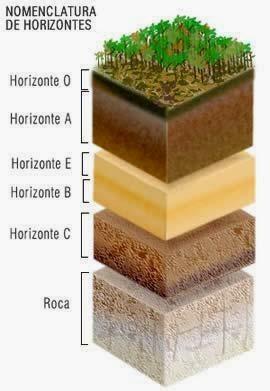 Por qu ocurre la perdida de suelos en el per for Como esta constituido el suelo