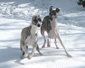 Nur so braucht hund keinen Mantel